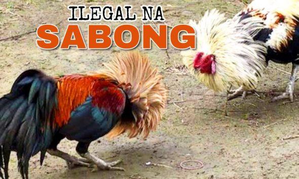 Illegal na Sabong